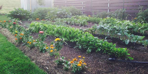 Vegetable Garden With Companion Plants