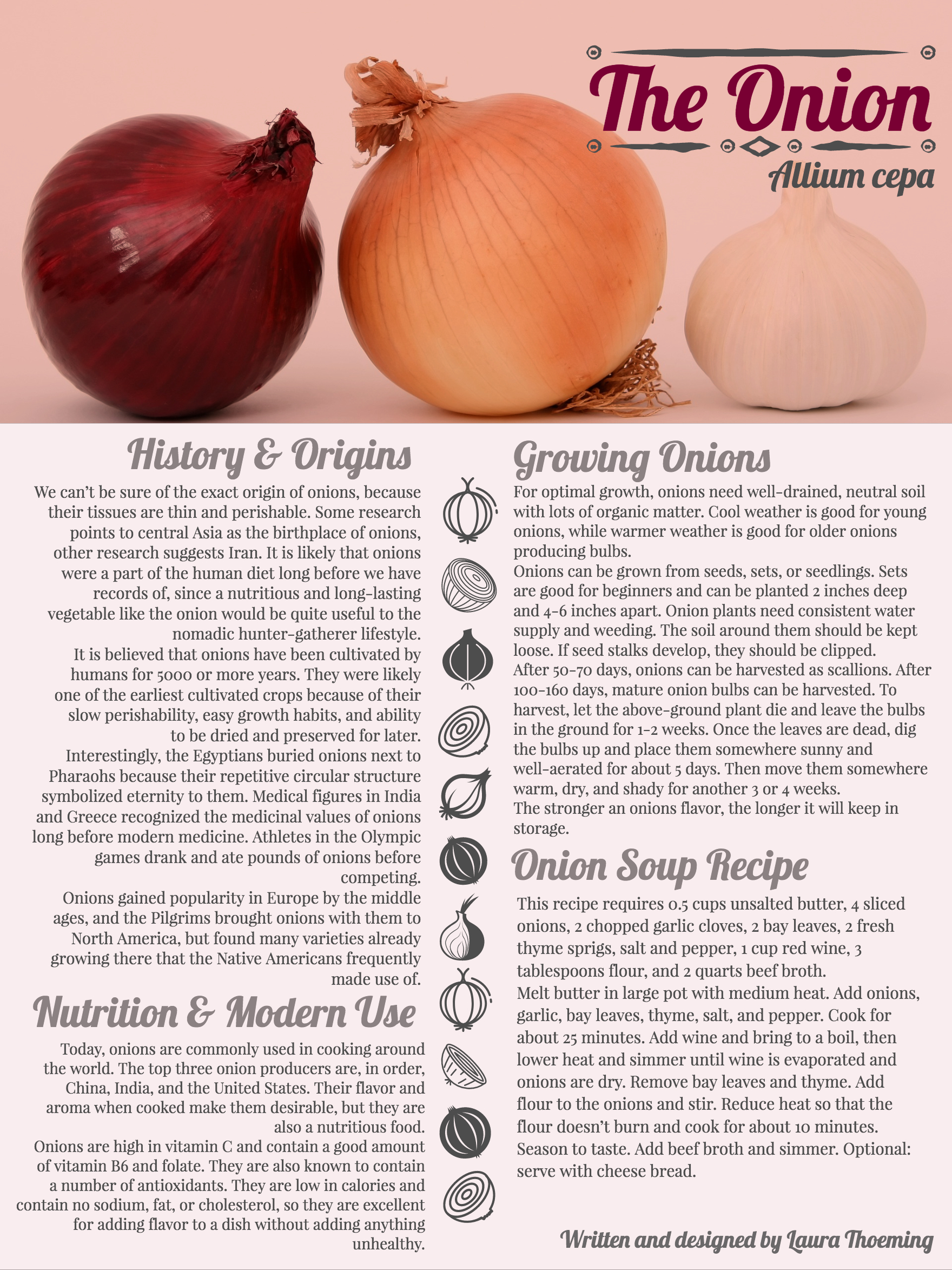 onion infographic with origins recipes and how to grow instructions