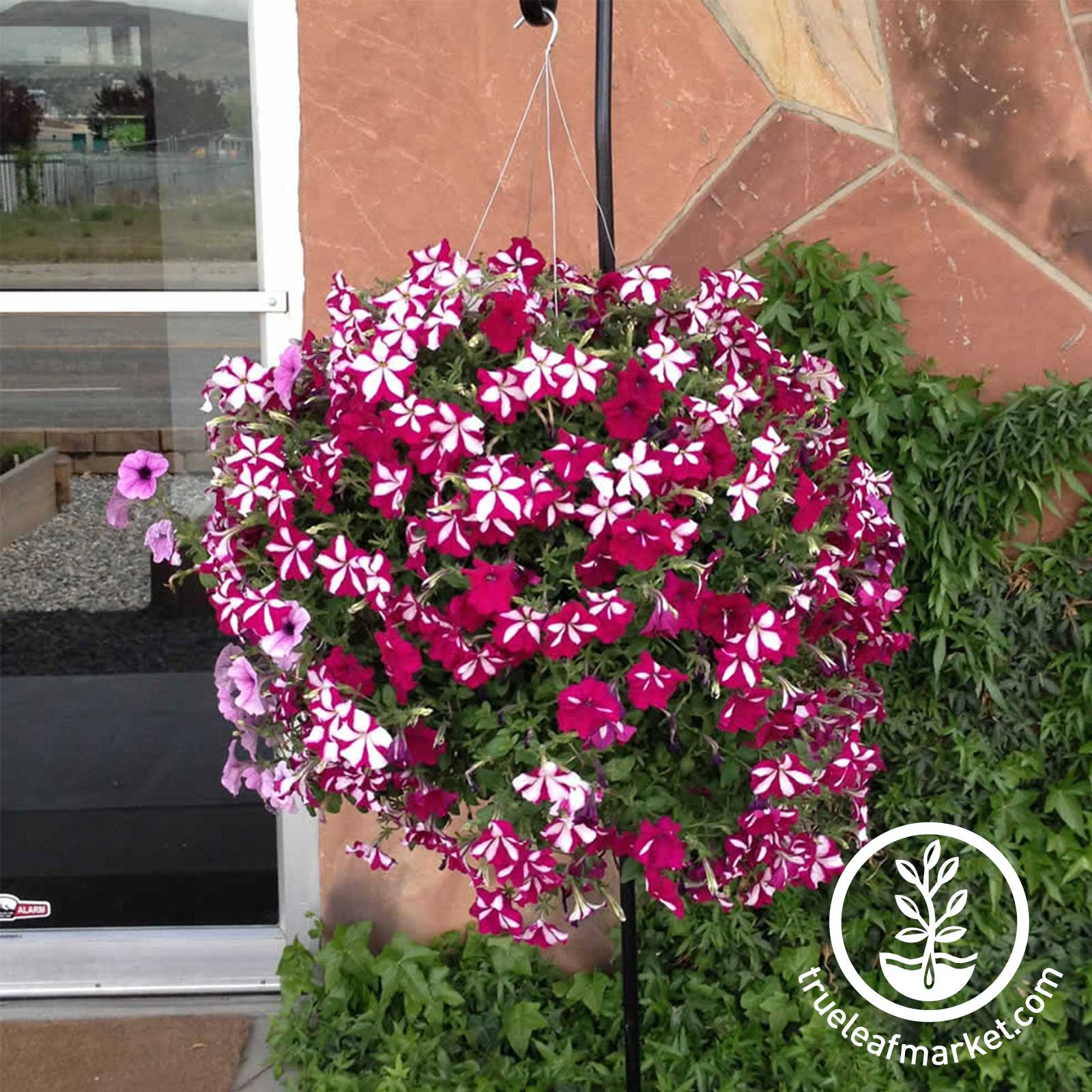 3 Gallon Basket with Flowers