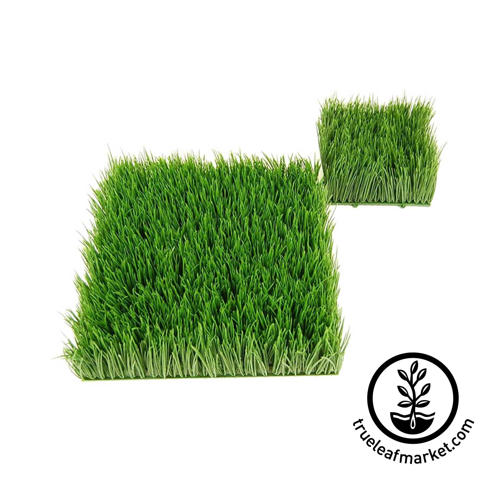 Artificial Wheat Grass Squares