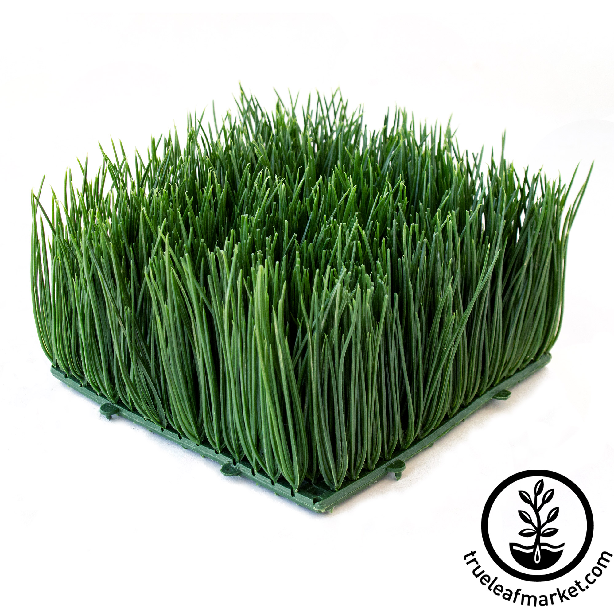 Underside of Artificial Wheatgrass 6 inch by 6 inch by 4 inches high