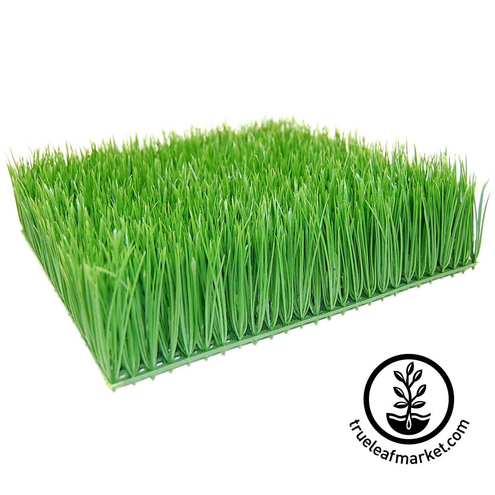 Artificial Wheatgrass 12 inch by 12 inch by 4 inches high
