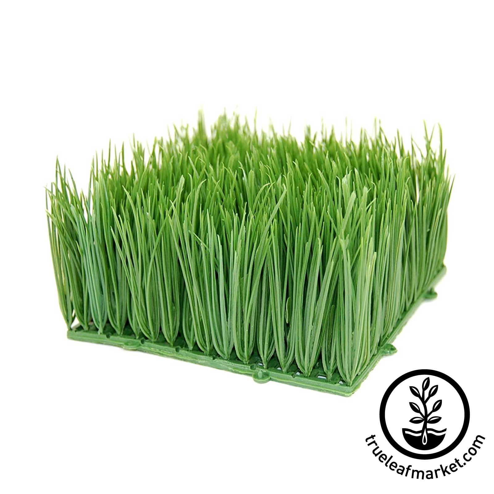 Artificial Wheatgrass 6 inch by 6 inch by 4 inches high