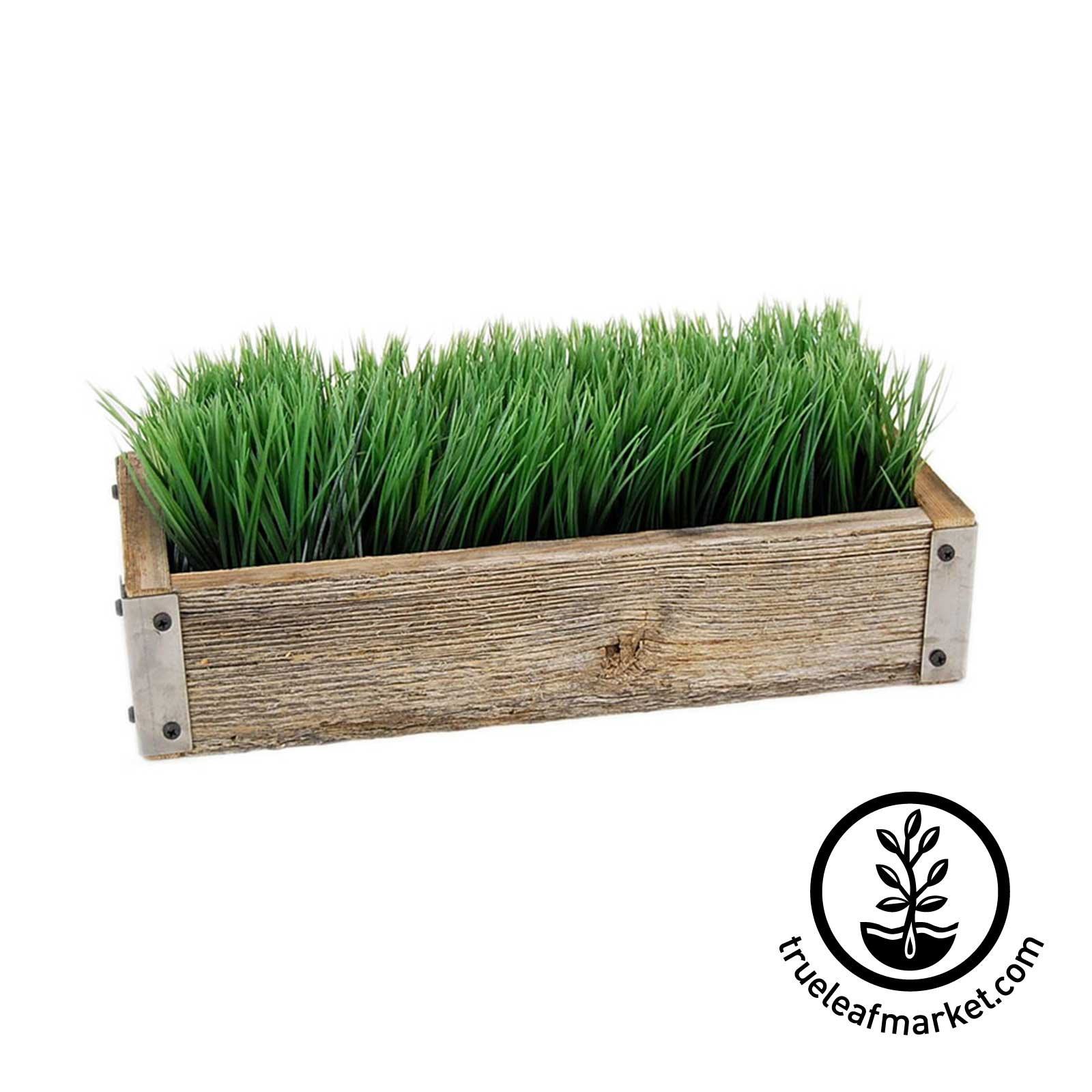 Barnwood Planter with Wheatgrass