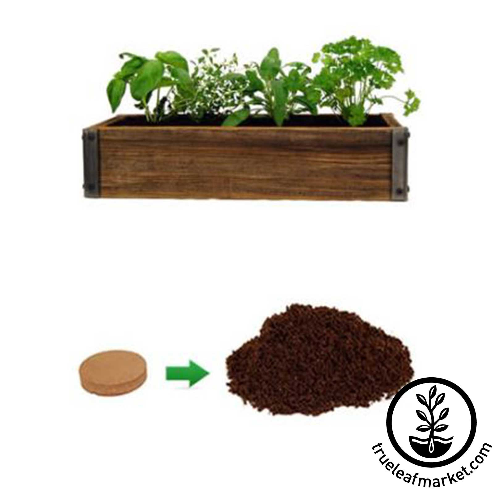 Culinary Herb Garden - Wondersoil - Just Add Water