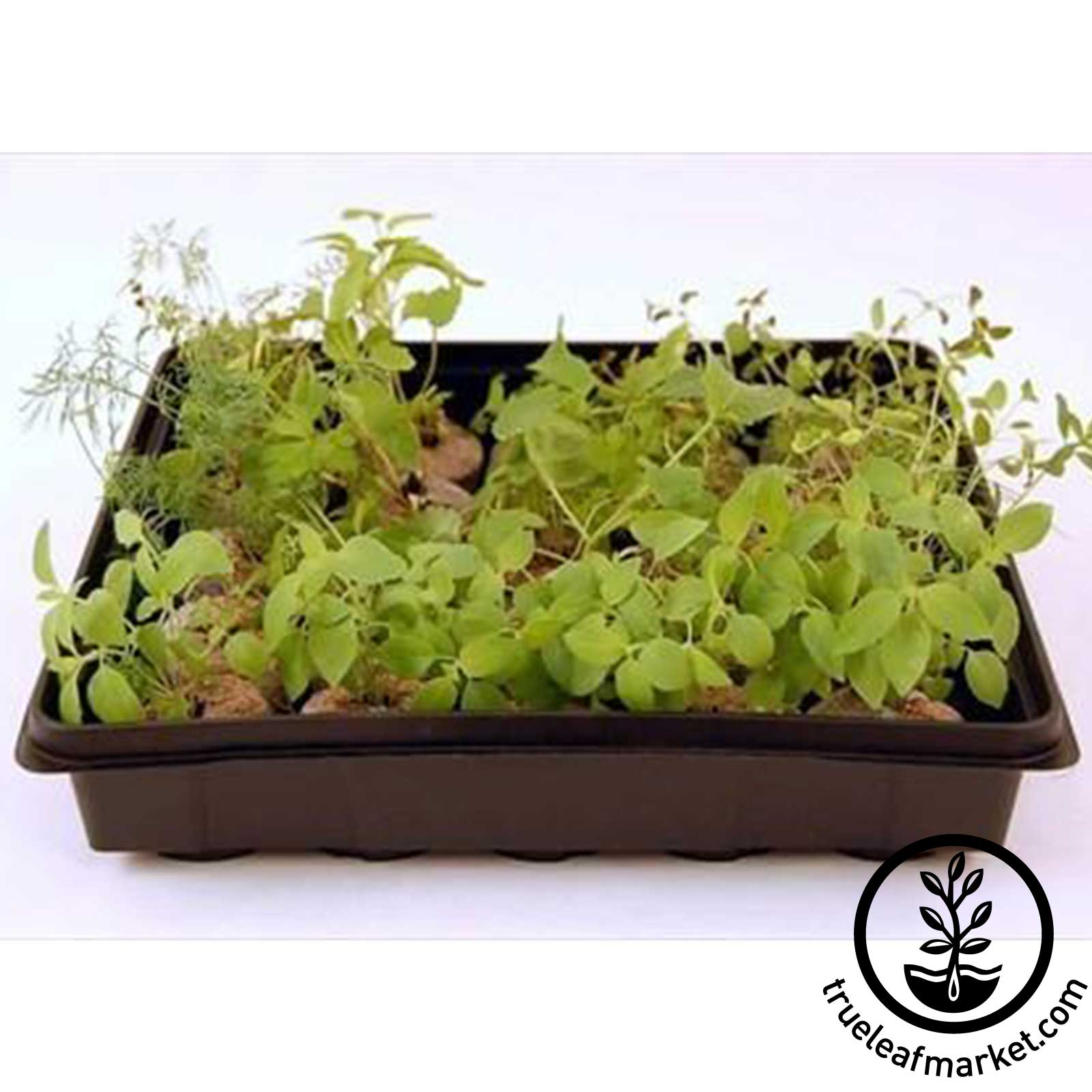 Small Plant Grow Tray with Herbs