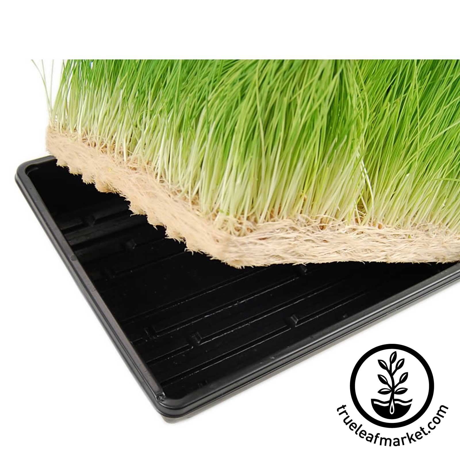 Micro mats hydroponic growing pads for wheatgrass for Best growing medium for microgreens