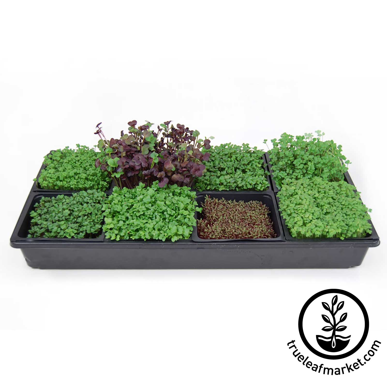 Micro mats 5 x 5 hydroponic grow pads for wheatgrass for Best growing medium for microgreens