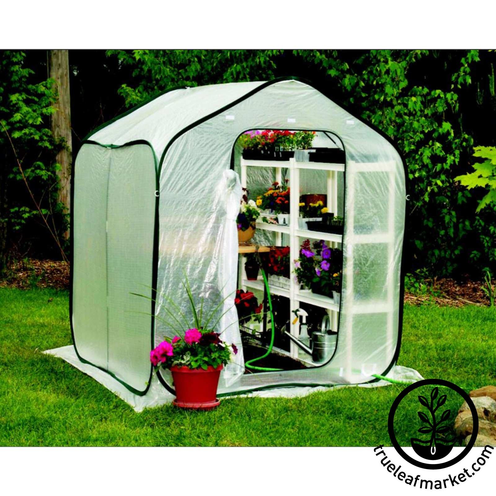 Mini Greenhouse - SpringHouse -  6 x 6 x 6.5 springhouse greenhouse, spring house mini-greenhouse