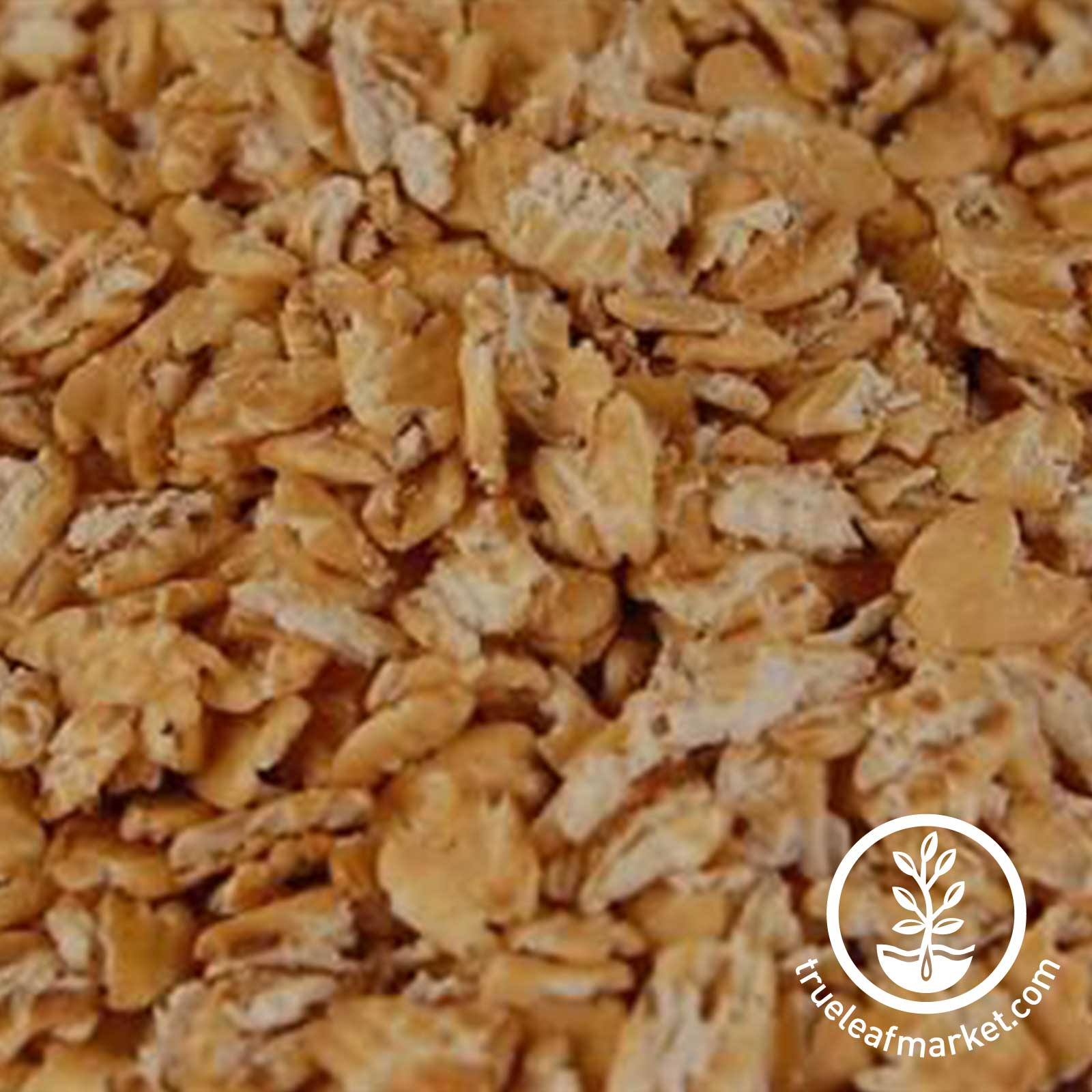 Home made rolled oats - Close Up