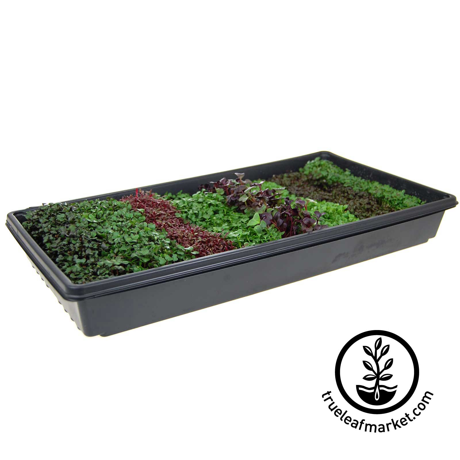 Colorful Micro Greens Planted in One Tray