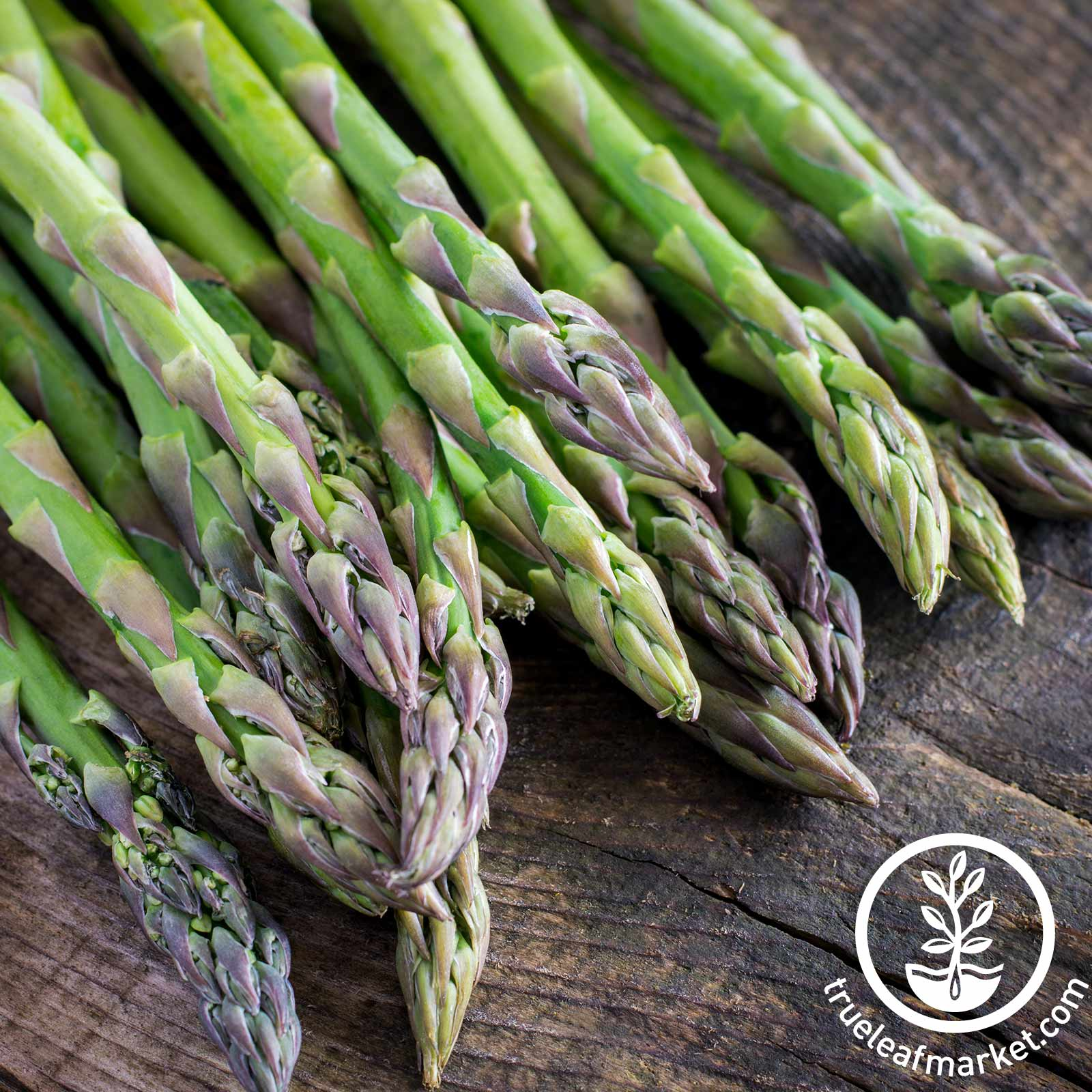 Mary Washington Asparagus Seed