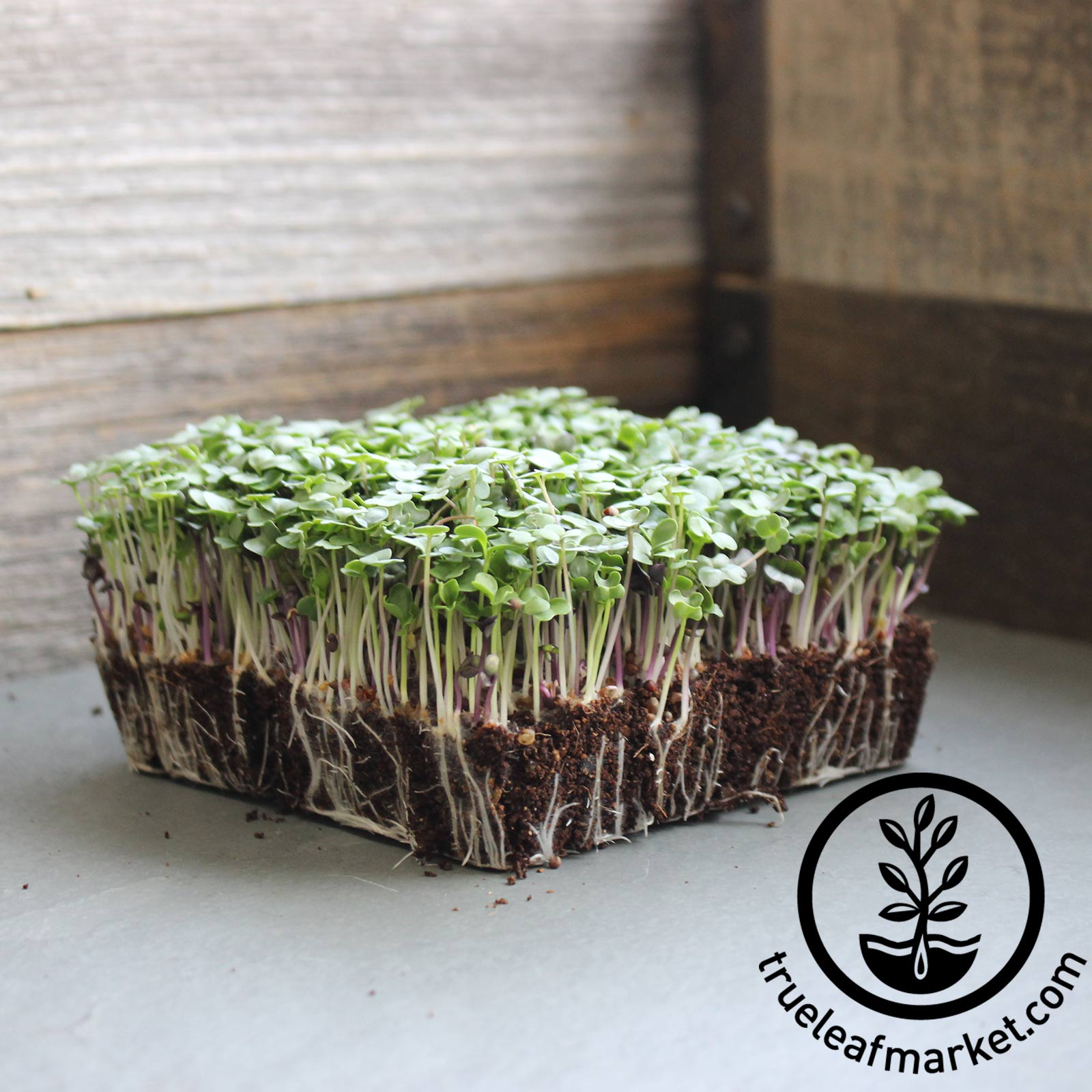 Basic Microgreen Seed Mix