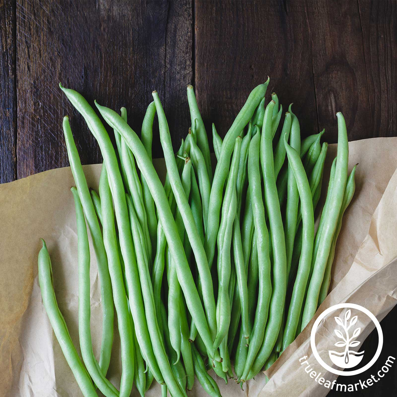 Blue Lake Bush Bean Seeds