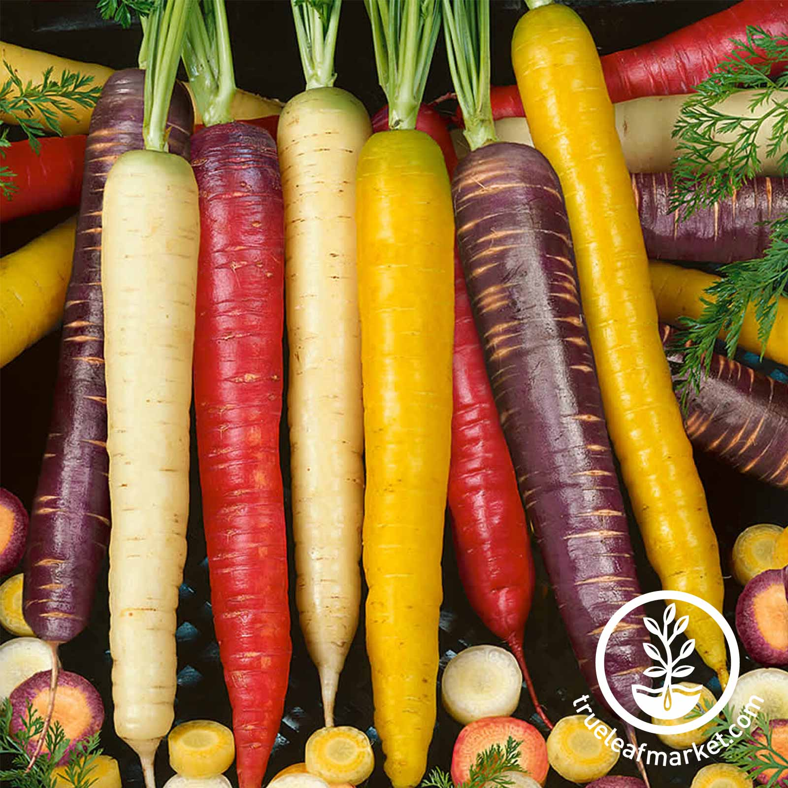 Carrot Rainbow Blend Vegetable Seed