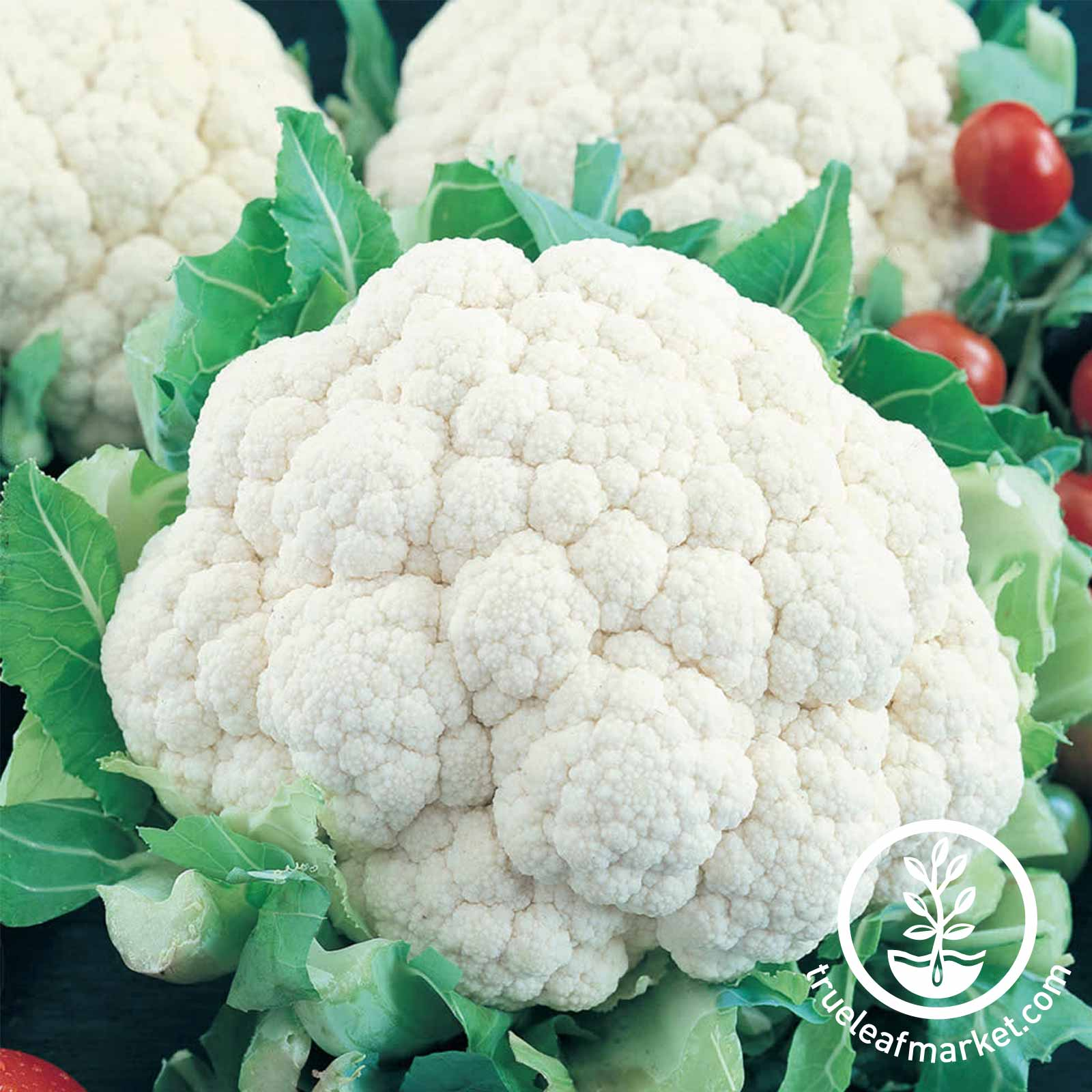 Cauliflower Snowball Y Improved Seed