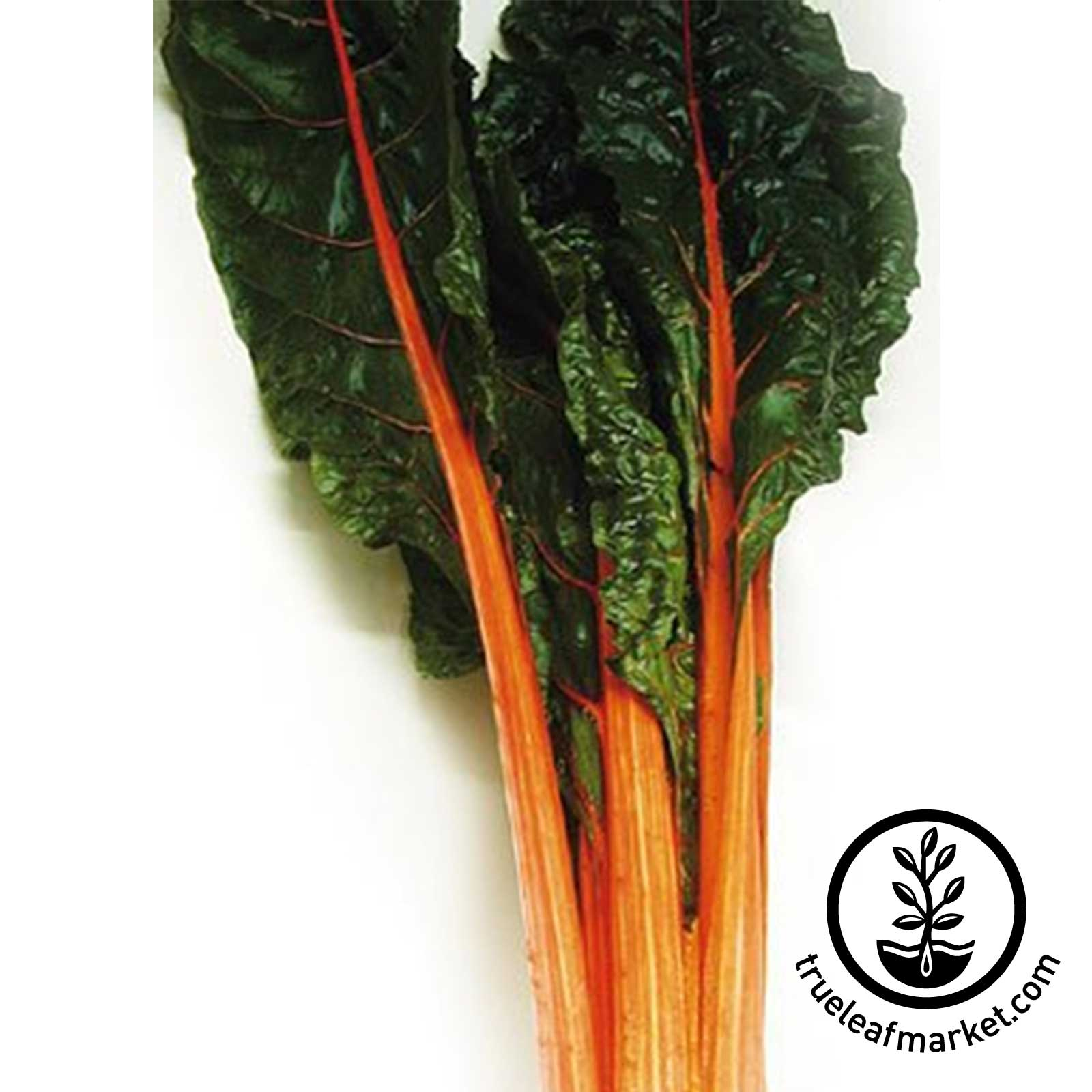 Non-GMO Orange Swiss Chard