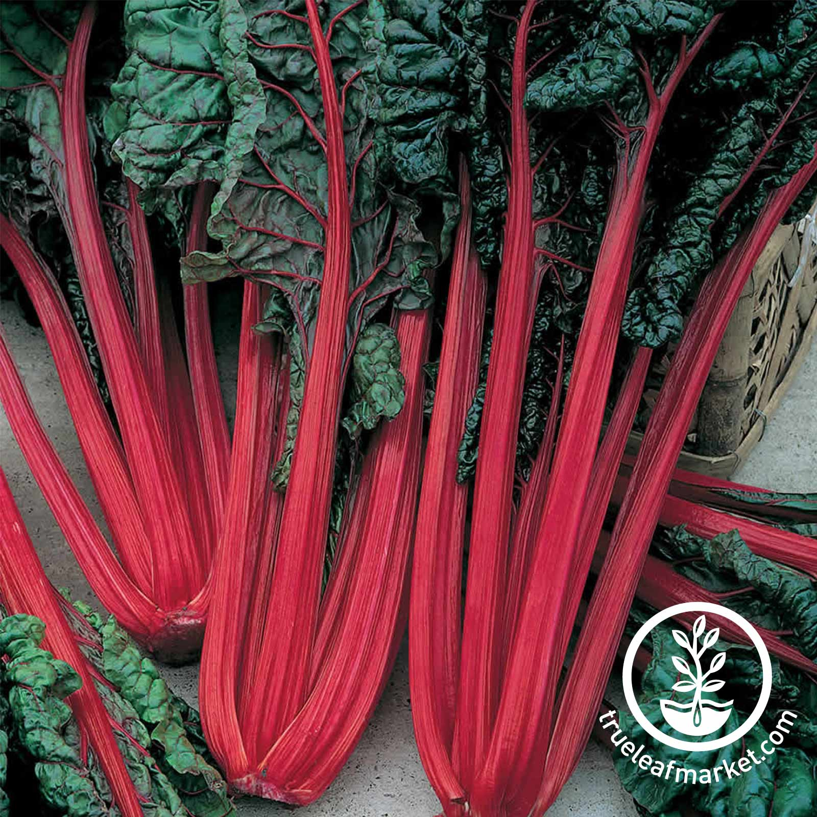 Chard Swiss Ruby Red Seed