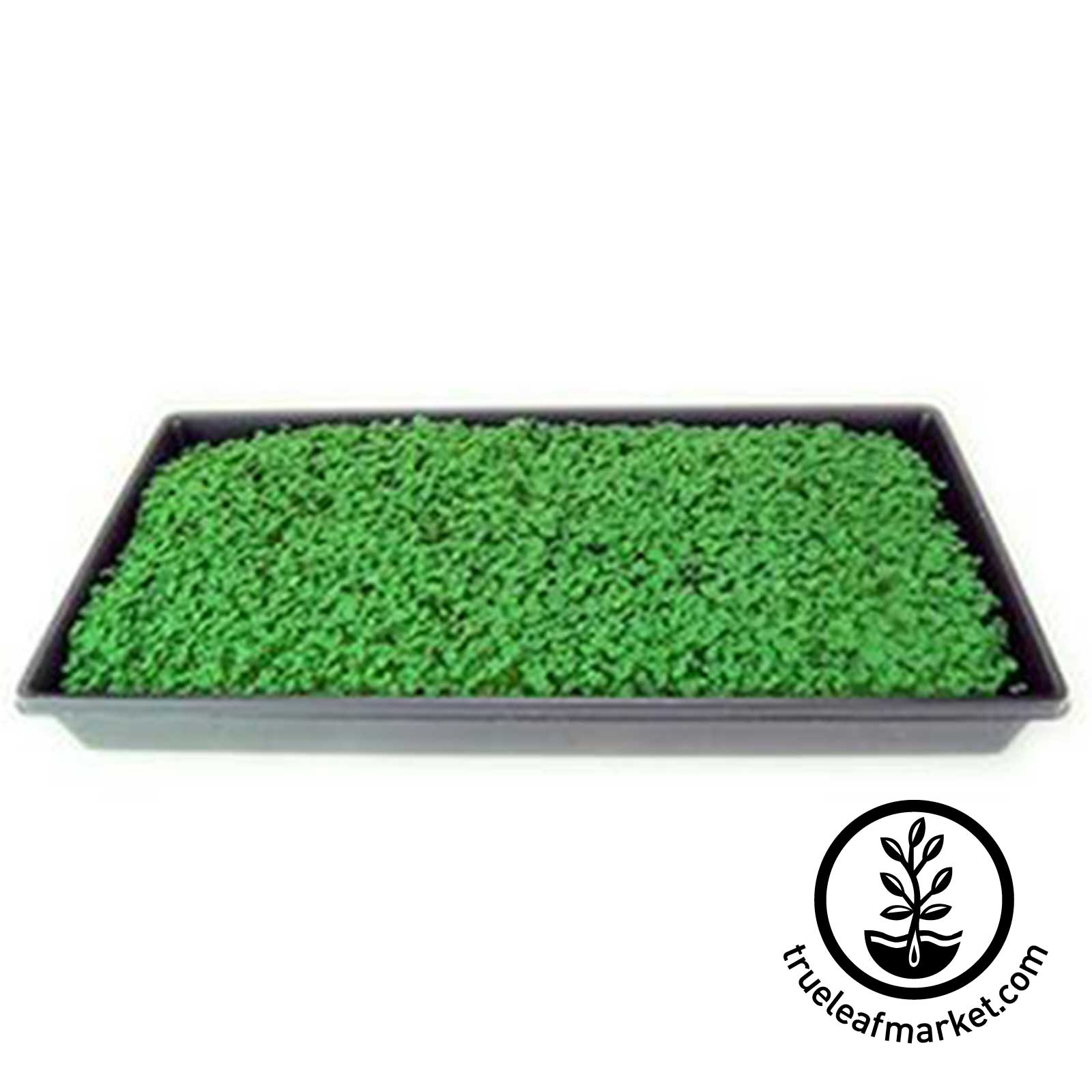Tray of Chia Micros