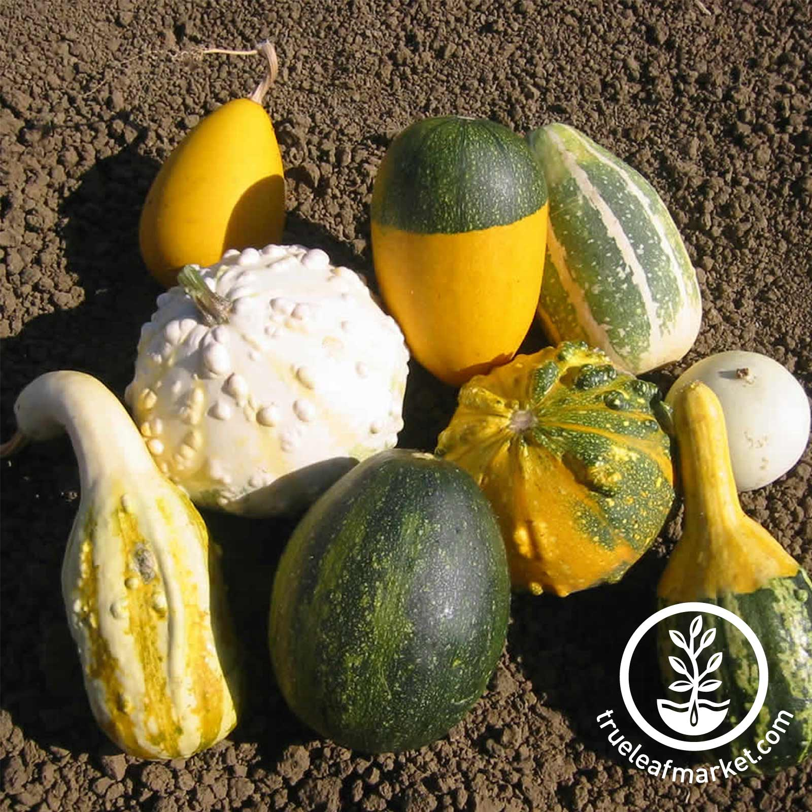 Gourds Large and Small Mix Seed