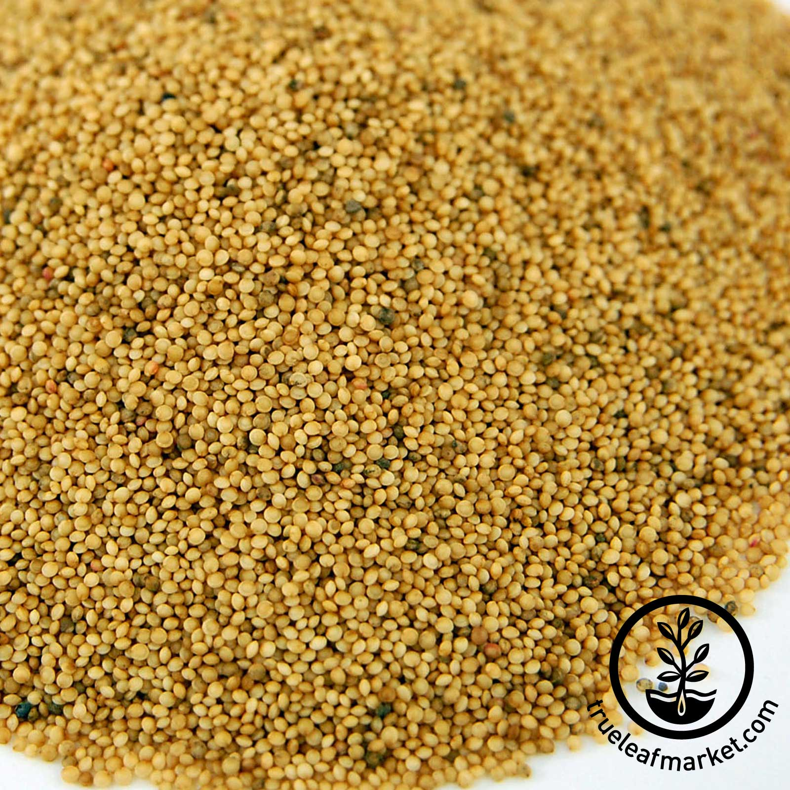 Organic Amaranth Grain - Close Up