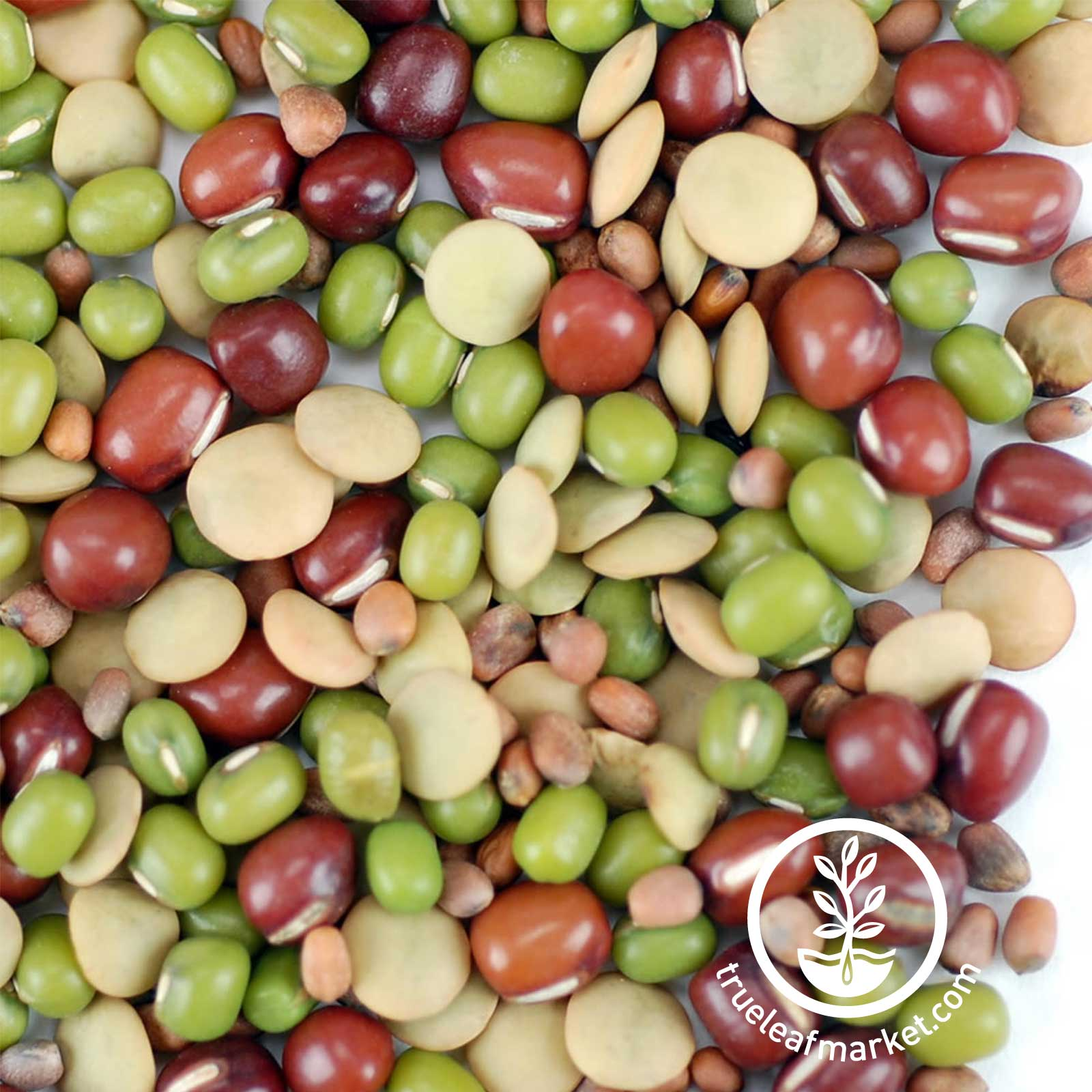 Close Up - Organic Bean Salad Mix