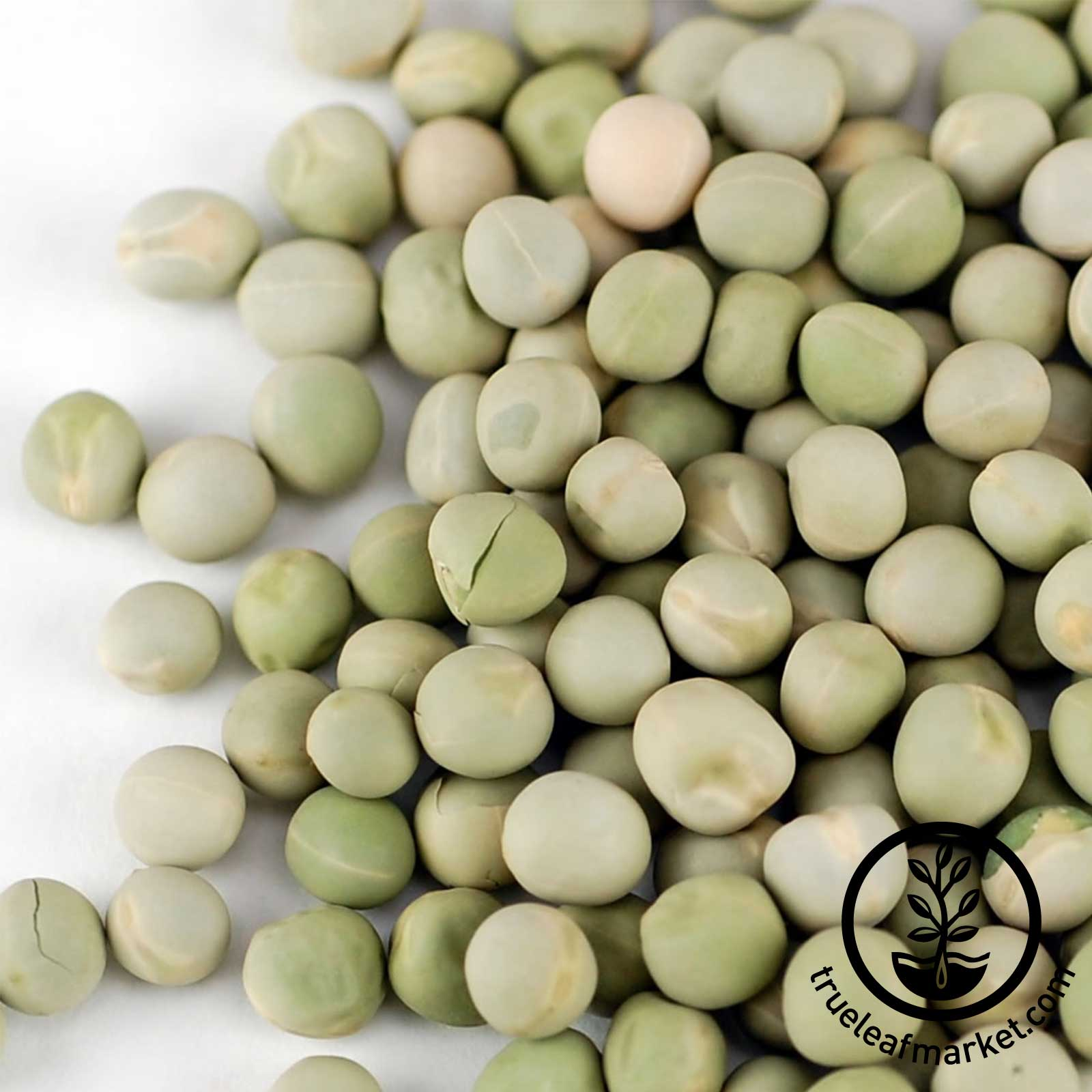 Green Pea Sprouting Seed - Organic