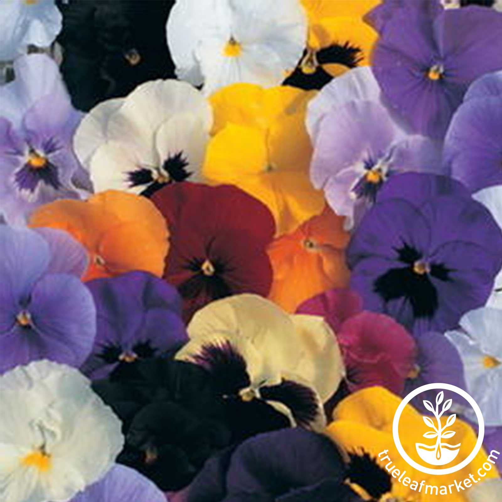 Pansy Delta Premium Series Mix Seed