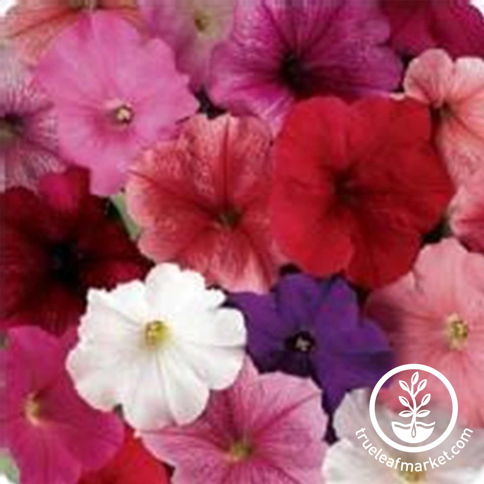 Petunia - Madness Series (pelleted) - Total (blend of all colors)