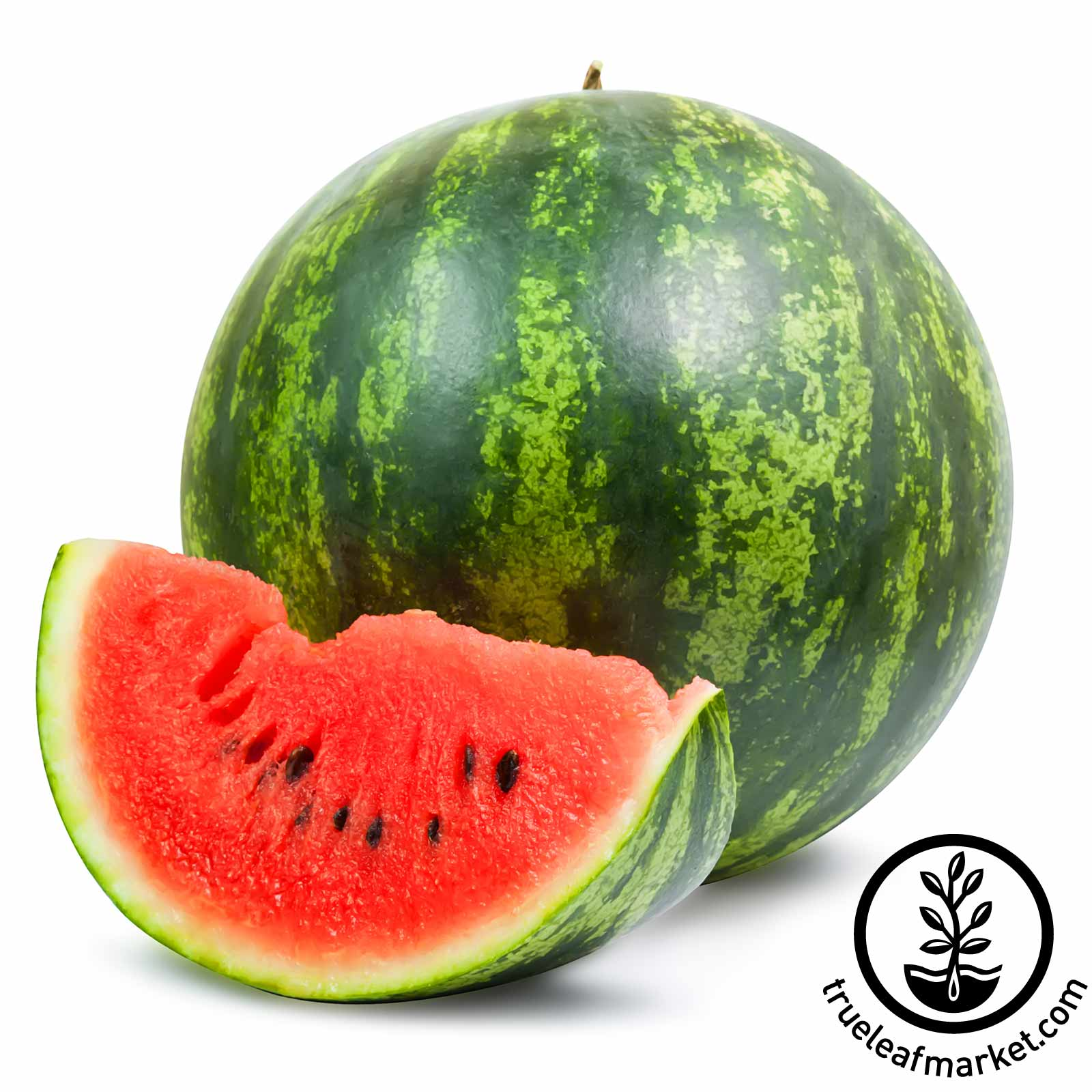 Watermelon Shiny Boy Hybrid Seed