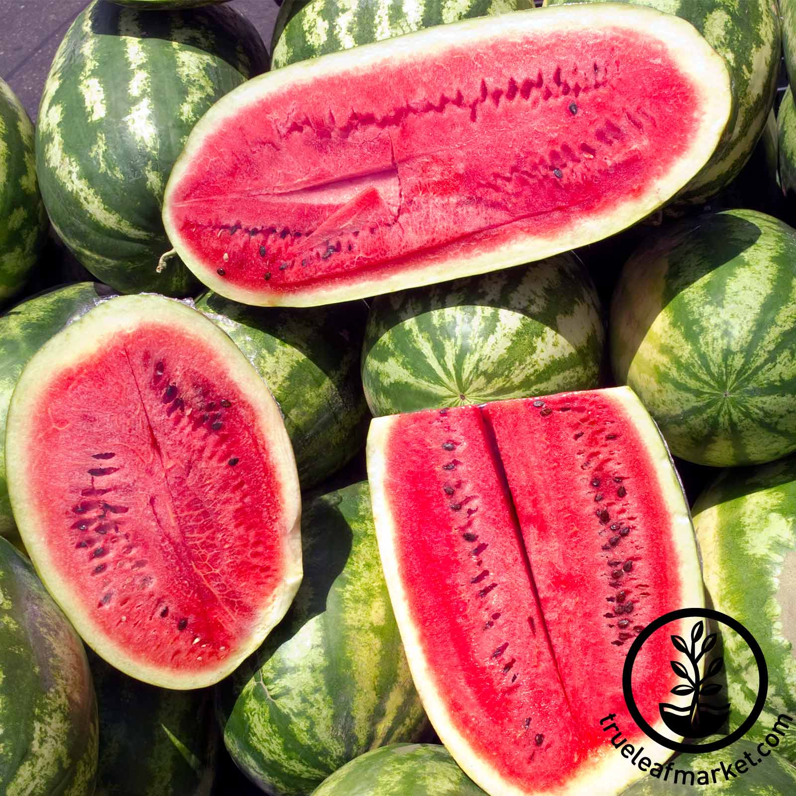 Watermelon Sweet Beauty Hybrid Seed