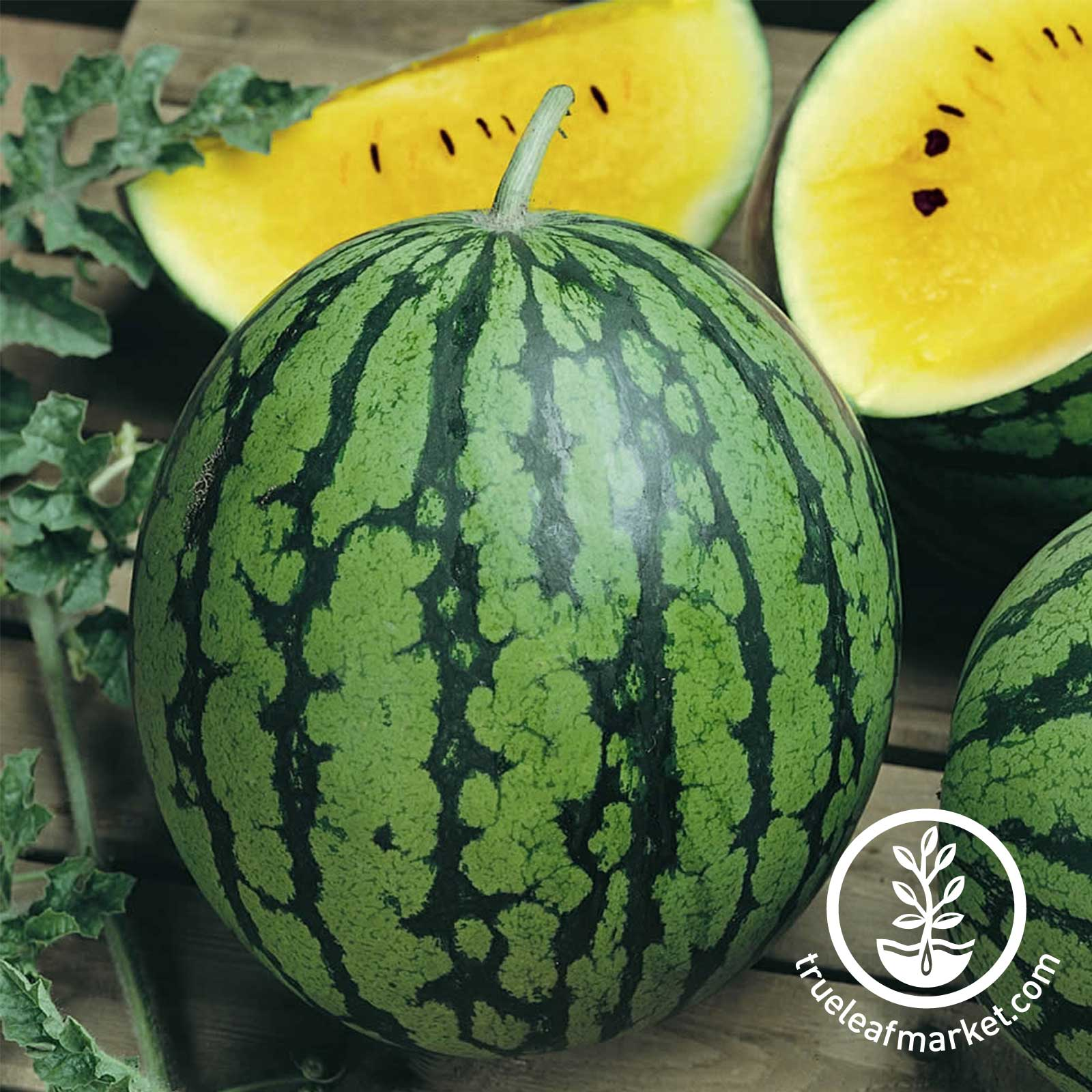 Watermelon Yellow Baby Doll Hybrid Seed