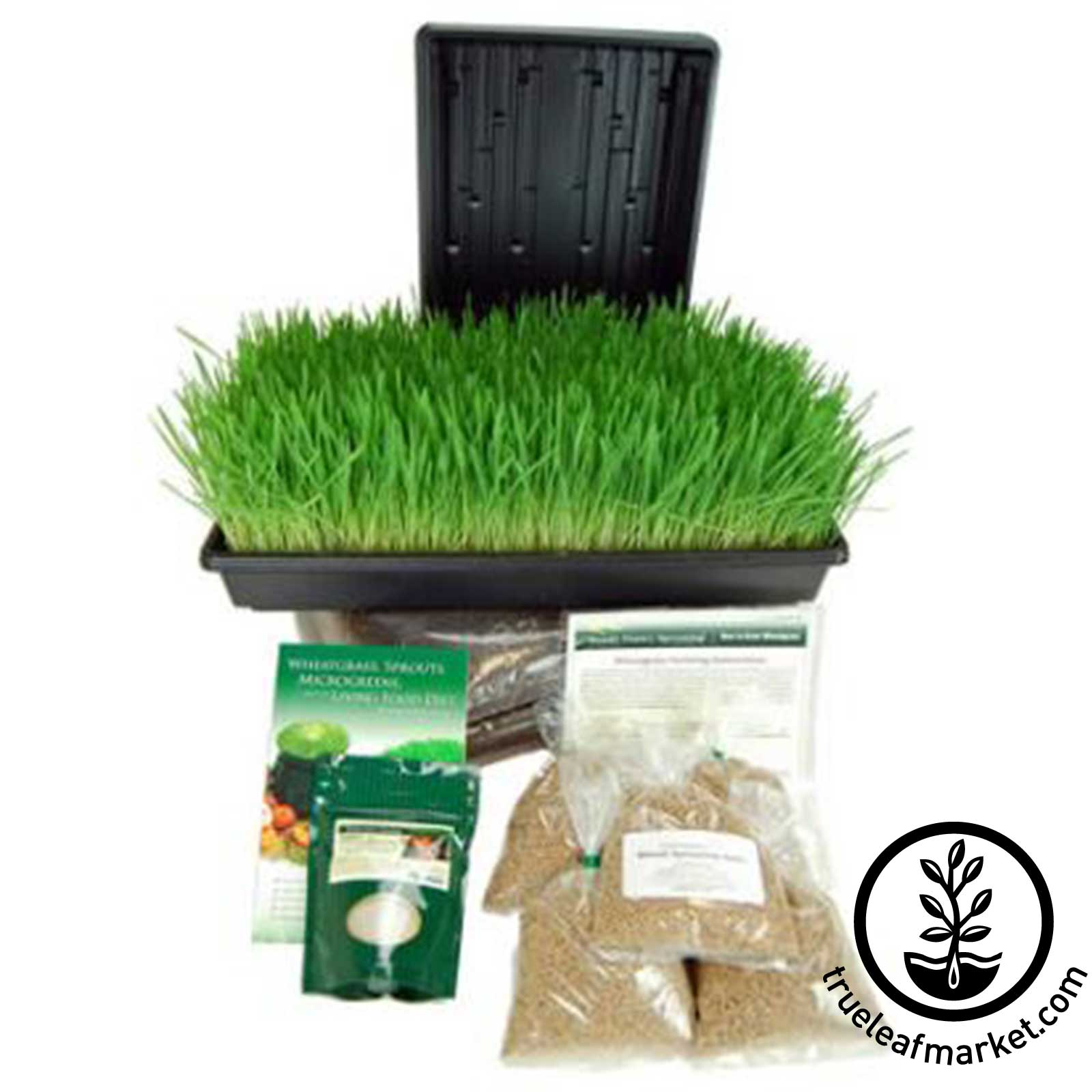 Barleygrass Growing Kit
