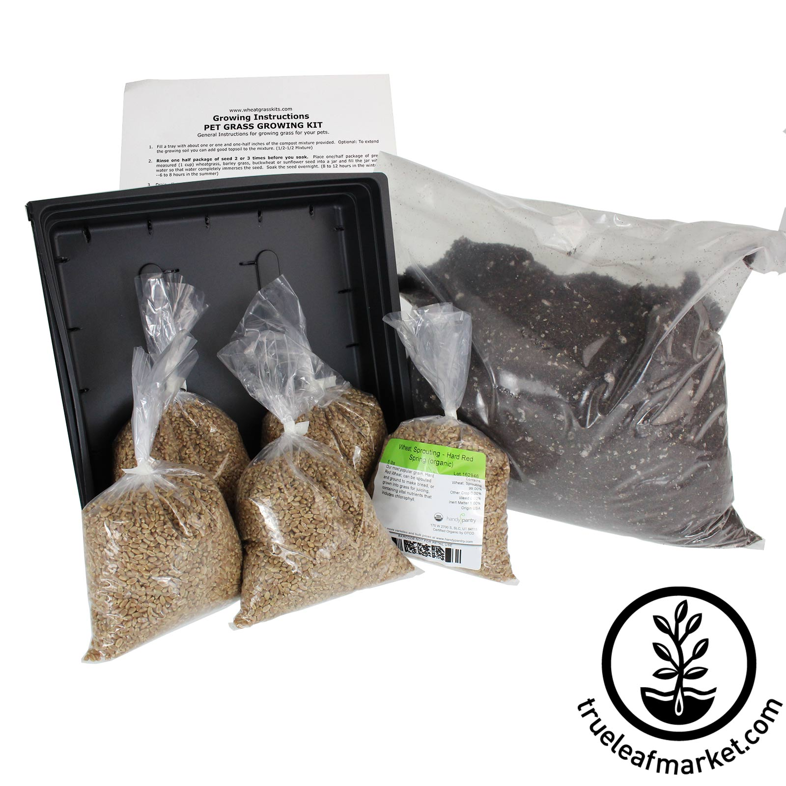 Organic Dog & Cat Pet Grass Kit