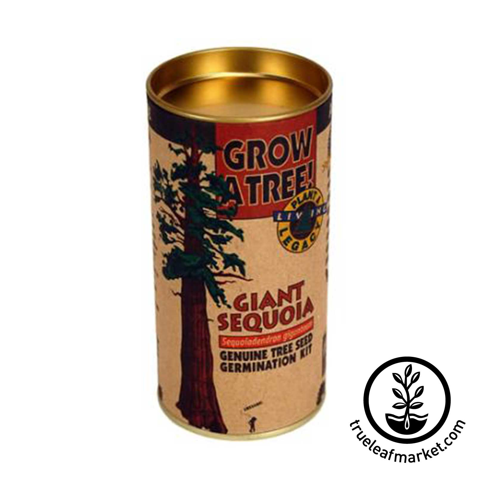 Giant Sequoia Tree Kit tree, kit, trees, giant, sequoia, seed