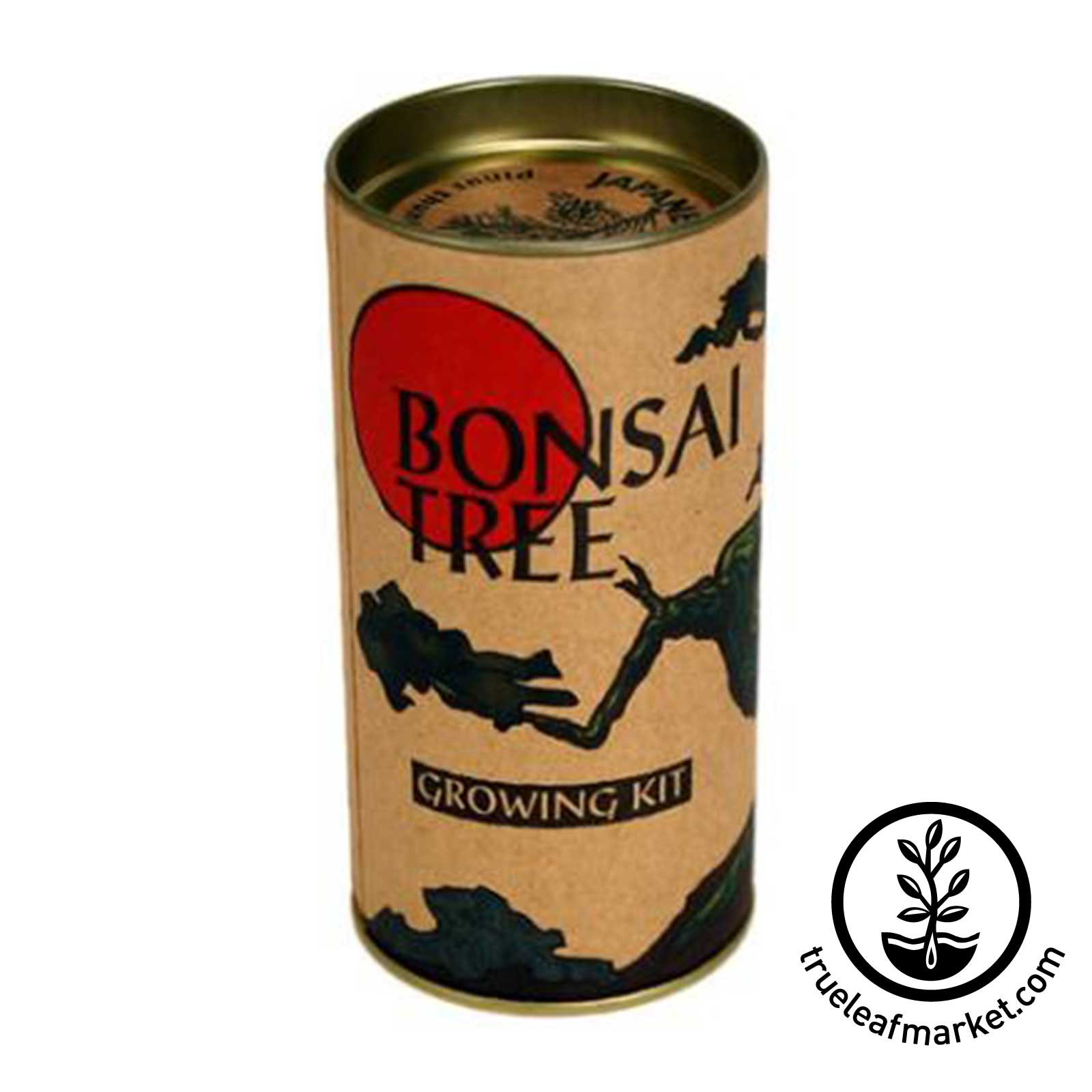 Japanese Black Pine Bonsai Tree Kit tree, kit, trees, japanese, black, pine, seed