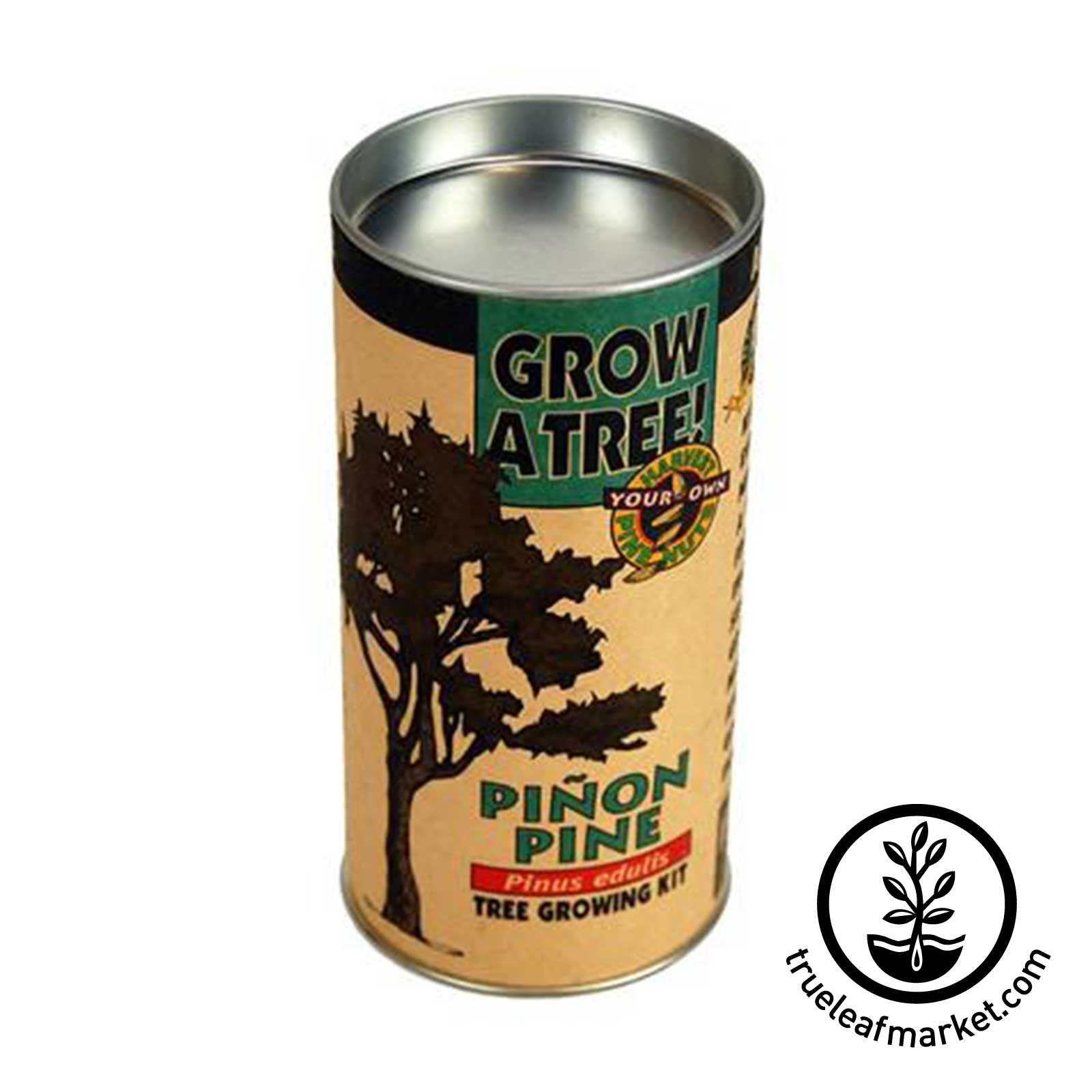 Pinon Pine Tree Kit tree, kit, trees, pinon, pine, seeds
