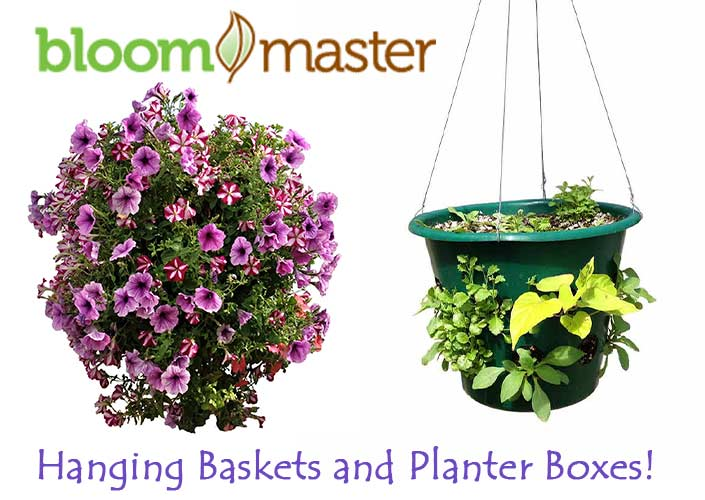 Bloom Master Hanging Baskets and Planter Boxes