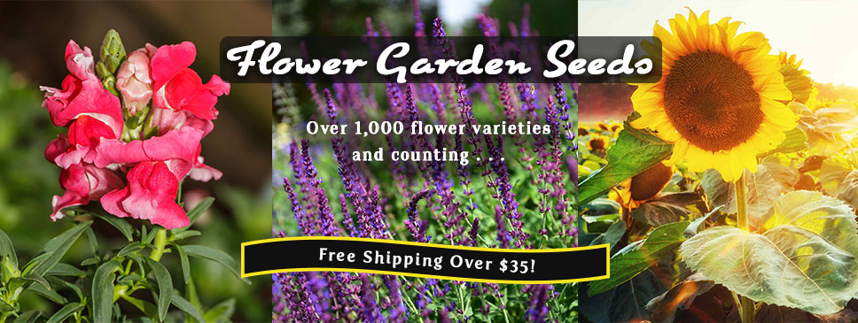 Flower Garden Seeds from MVSeeds!