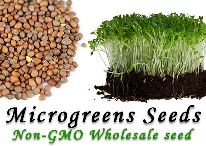 Non-GMO Seeds for growing Microgreens at True Leaf Market