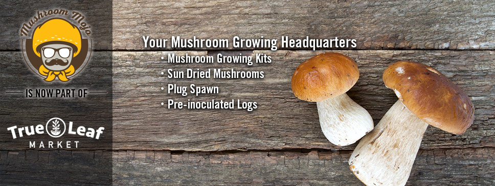 Mushroom Hompage - Now at True Leaf Market!