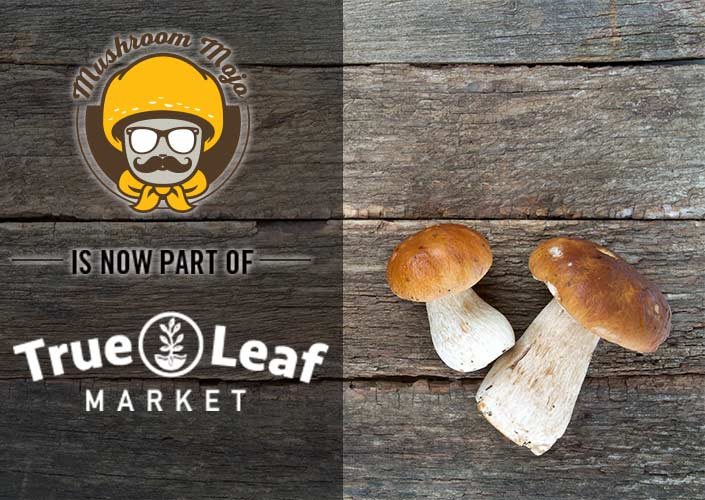 Mushroom Mojo Hompage - Now at True Leaf Market!