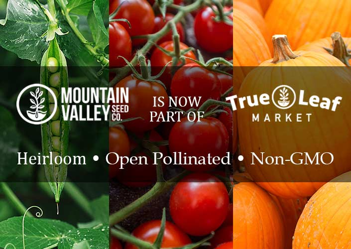 Mountain Valley Seeds Co. At True Leaf Market!