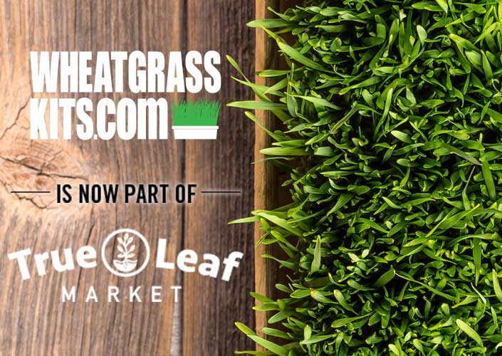 Wheatgrass Kits Hompage - Now at True Leaf Market!