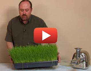 How to Juice Wheatgrass and More